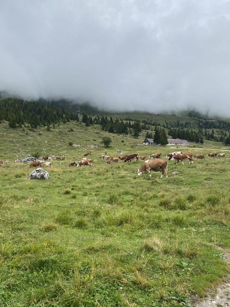 rifugio brazzà altopiano del montasio escursioni friuli per bambini trekking semplici in friuli