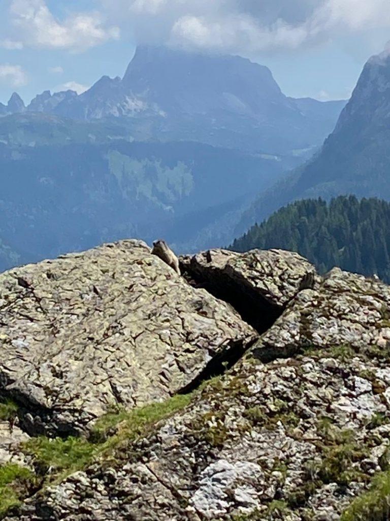 marmotta sulla roccia vicino al lago dimon