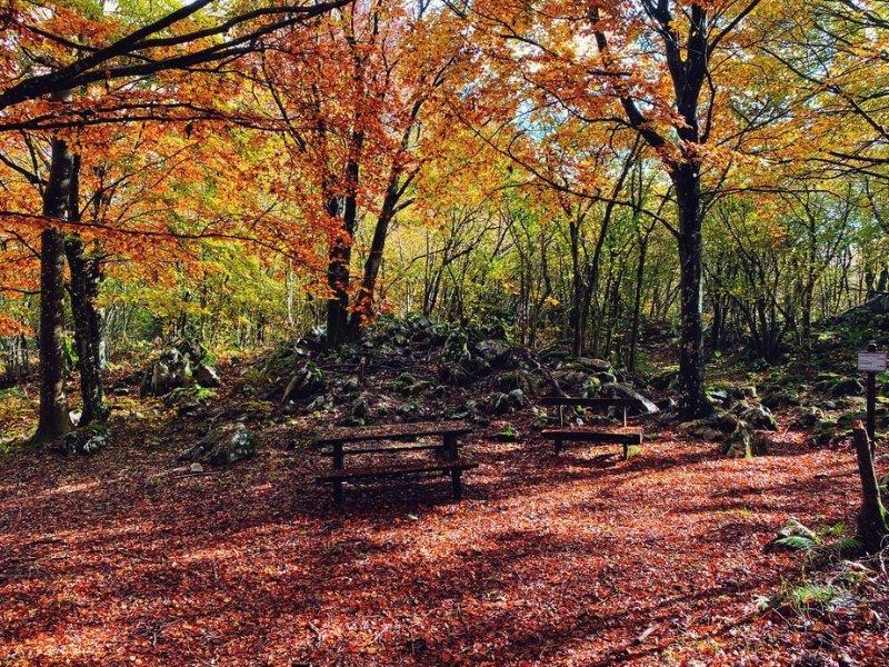 Bosco in autunno del Monte Pala