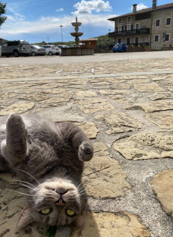 Gatto in Piazza a Poffabro