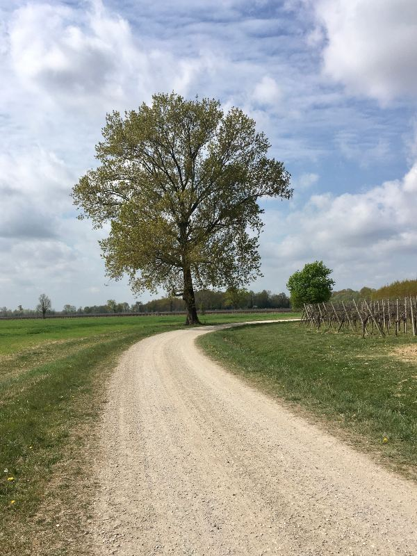 Strada bianca con albero di sfondo