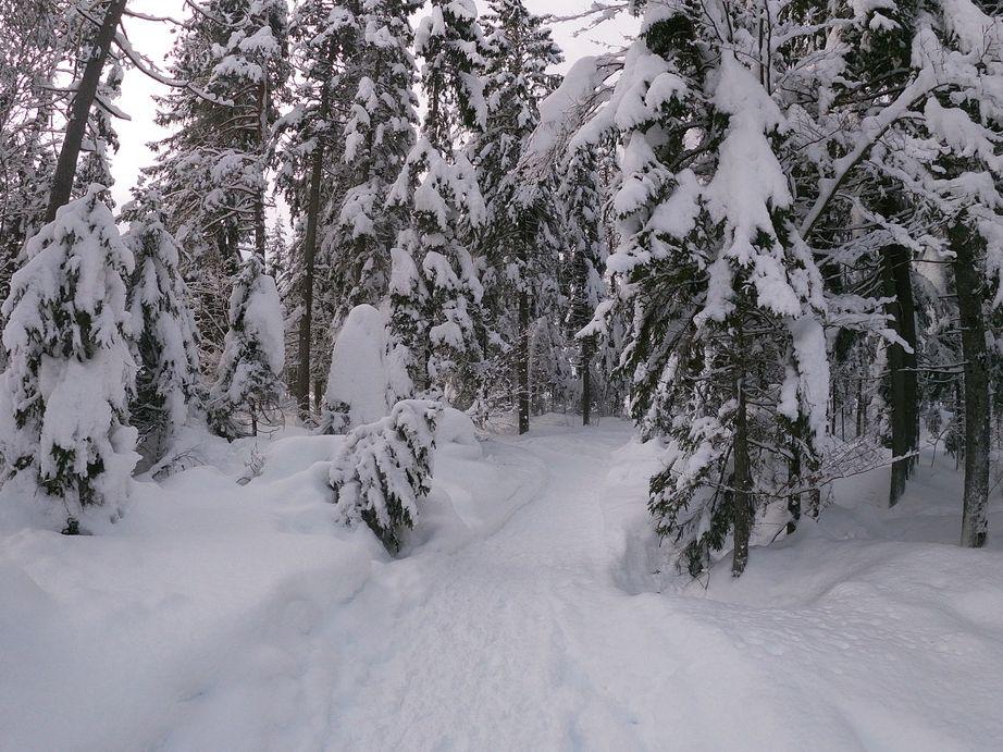 Neve sugli alberi